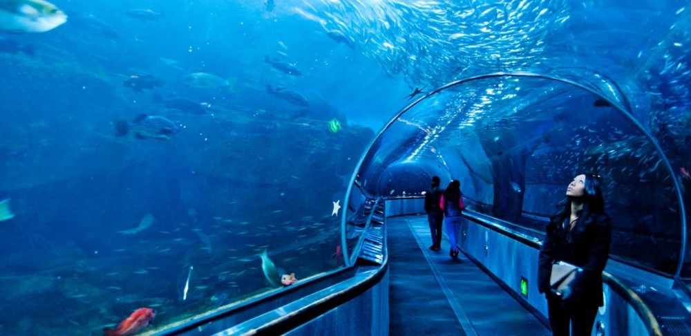 Dubai aquarium