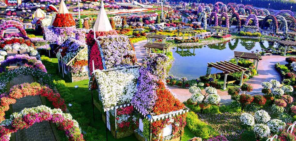 Dubai miracle garden birds eye view