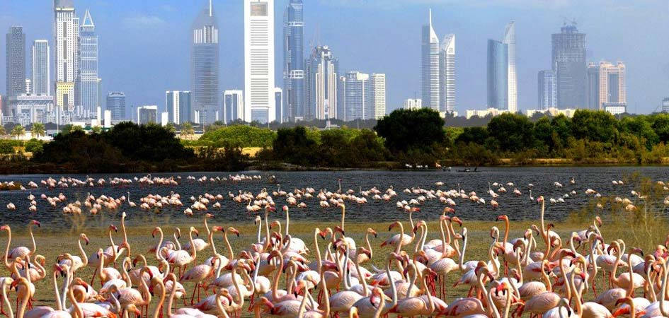 Ras-al-khor-wildlife-sanctuary