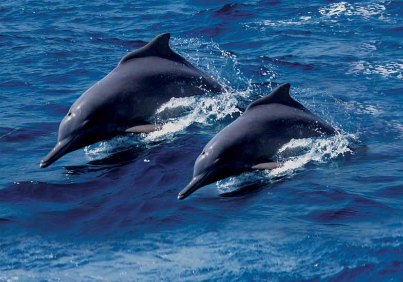 Social interaction and a playful attitude of dolphins keeps everyone happy